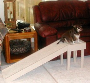 Chihuahua Ramp for a Sofa