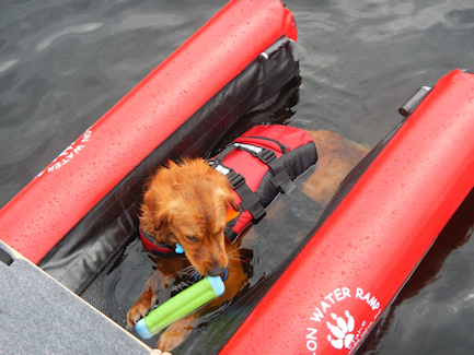 Dog On Water Ramp Pictures