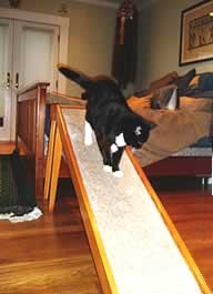 Cat Ramp for a Bed