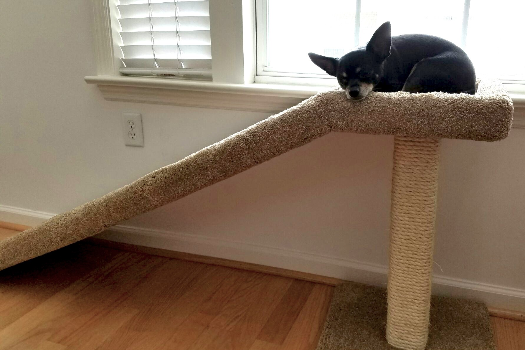 Cat Ramp with Scratching Post