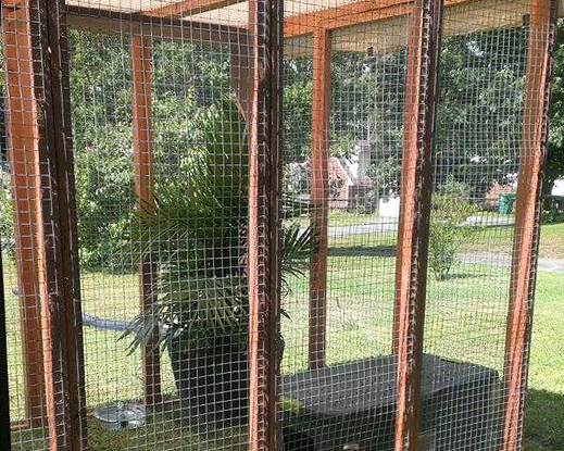 Outdoor Kitten Enclosure - Large (shown with cat mesh, kitten mesh has smaller 1 in x 1 in holes)